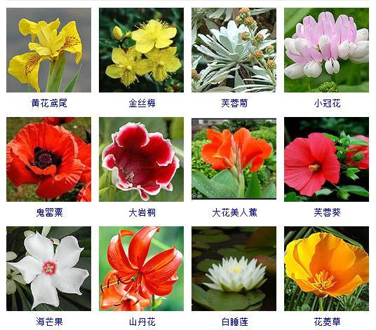 夏天養什麼花好,這裡有兩百多種夏天開的花兒,總有幾種適合你。