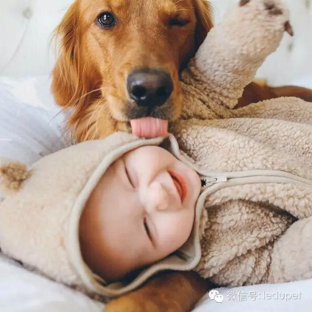 狗狗口臭原因大揭密!還能不能愉快的接吻了~