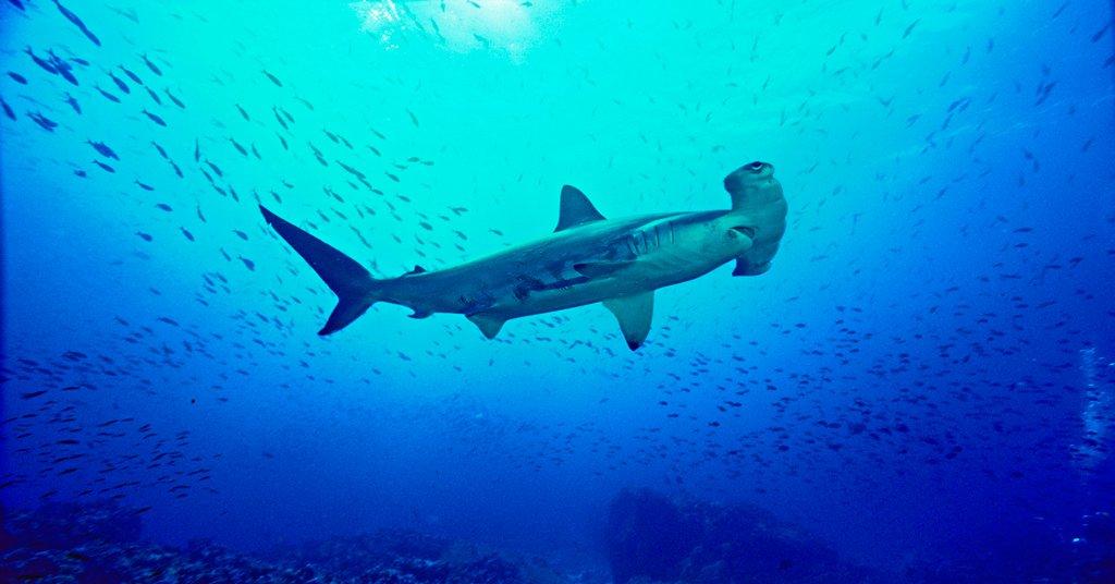 27隻世界上最可愛的海洋生物,尤其是#12讓人超想摸的!