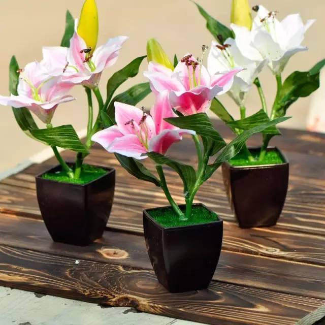 風水家居植物這樣擺,財運旺到讓人眼紅!