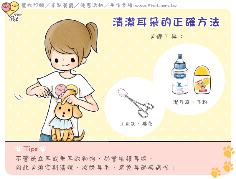 【 狗狗實用知識 】清潔耳朵的正確方法