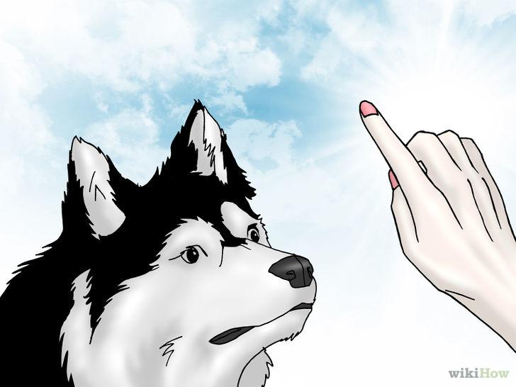 以Get Dogs to Stop Barking Step 4為標題的圖片