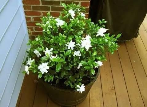 這4種水澆花比肥料還好,能枝繁葉茂、花開不斷!