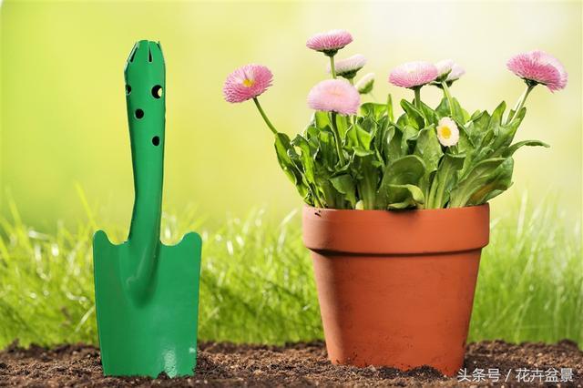 換盆時注意這幾點,盆栽花卉不會死,還容易爆盆