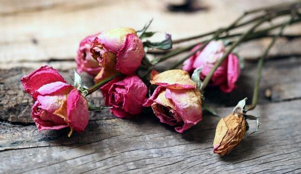 還在為鮮花花期短而苦惱? 教你一招花能保持一輩子!