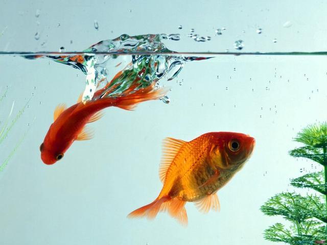 人生哲學:成功,就是把每一件事都做好! (太有哲理了!)