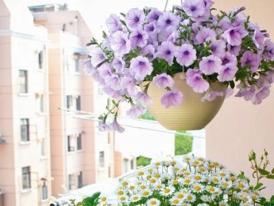 你還嫌陽台小? 人家只用窗台,就種出了大花園!