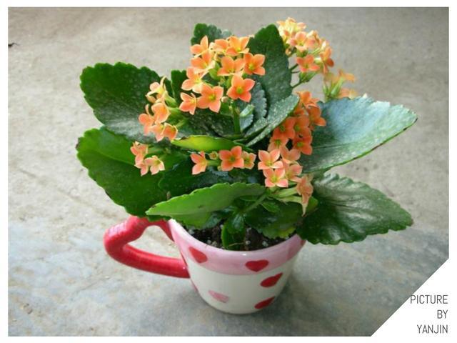 家裡的盆栽該放哪裡? 哪些植物喜歡曬太陽? 分類告訴你