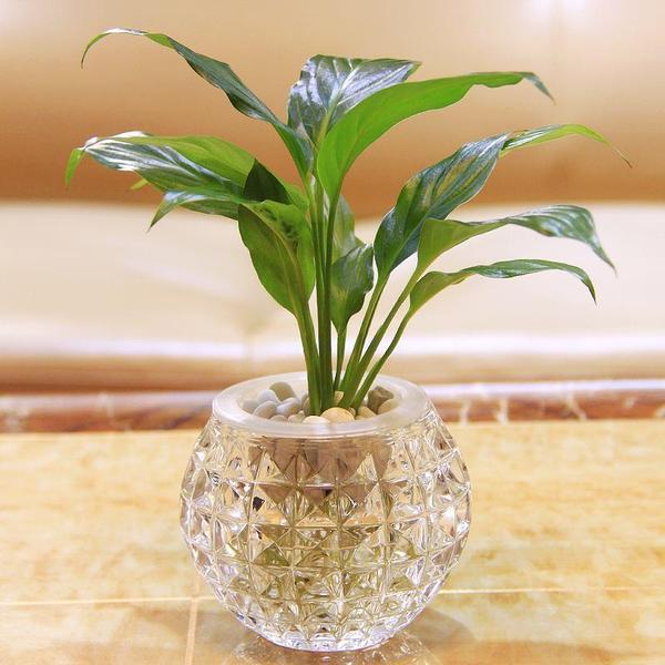 掌握這些知識,養好水培植物就這麼簡單!