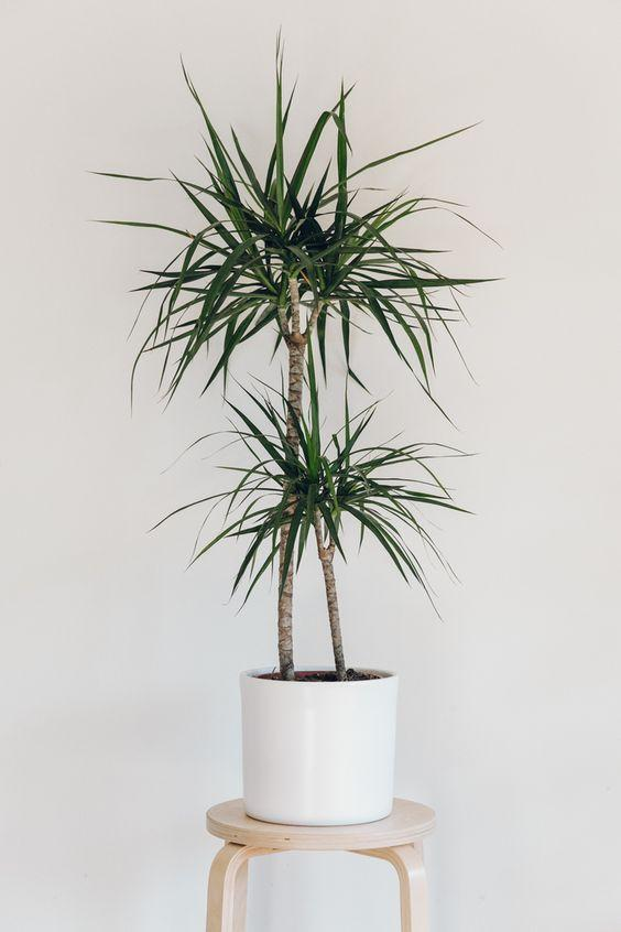 推薦10種適合室內種植的喜陰植物