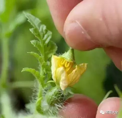 14種可以在陽台種的水果,5分鐘就能學會!