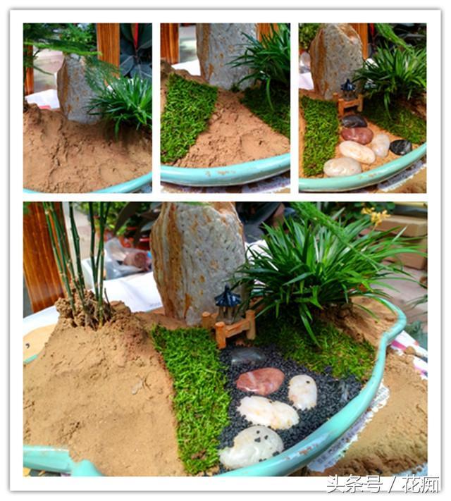 這樣搭配的文竹盆栽,瞬間變得高大上!