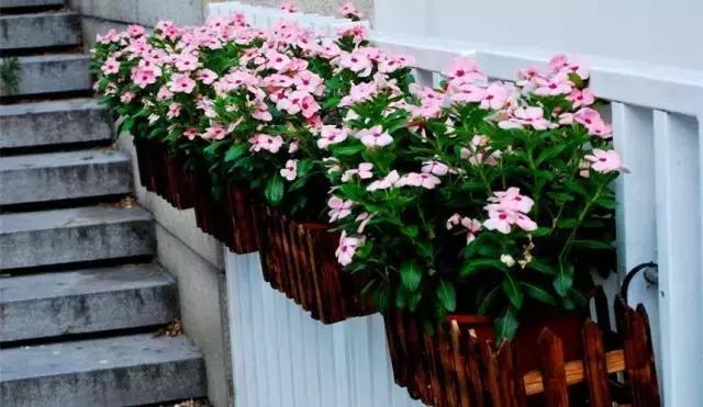這八種垂吊植物掛在家裡,鄰居都羨慕死了