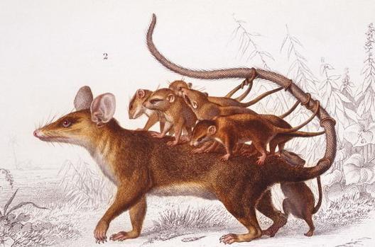 1972年出生:(45歲)屬鼠人的終生壽命,挺準!