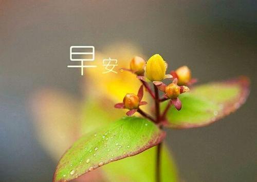 10句唯美早安語錄,心若不動,風又奈何