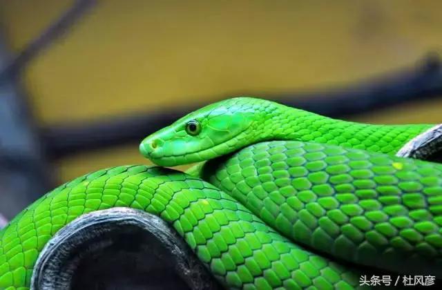 在非洲,千萬要遠離這些毒蛇!
