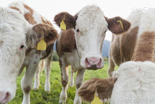 1973年45歲屬牛人的終生壽命,老人講的不騙人,你就任命吧!