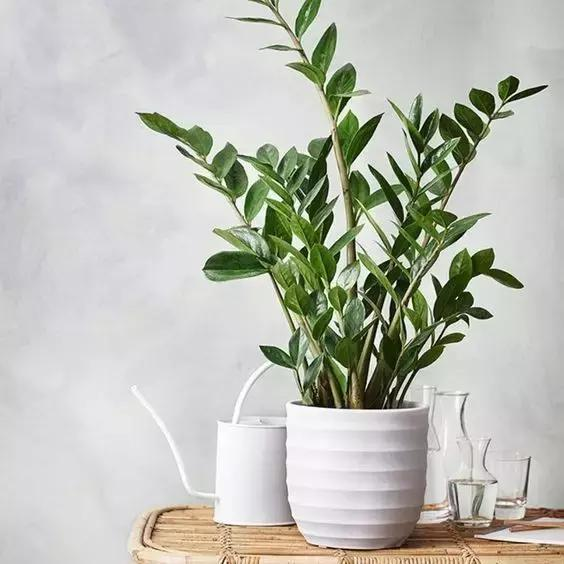 10種適合室內栽種的家庭綠植,美哭了!