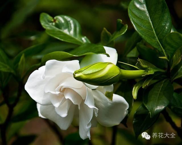 秋冬太冷,養花活不了? 50種花的越冬秘籍,愛看不看!