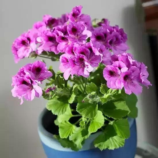 18種在室內會開花的植物,有窗戶就能養!