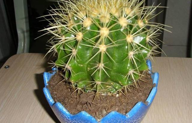 懶人最適合養的10種耐旱的植物,澆水越勤,死的越快!
