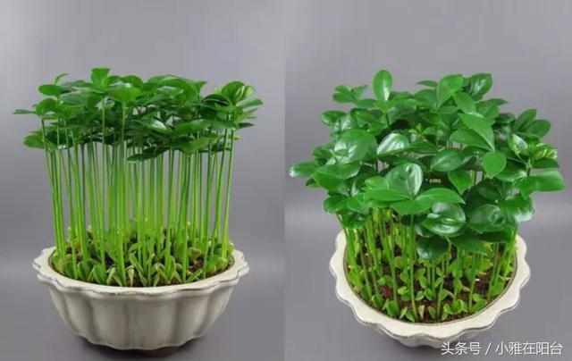 這幾種水果籽兒泡水里,一周就發芽生根,長成最美小盆栽!