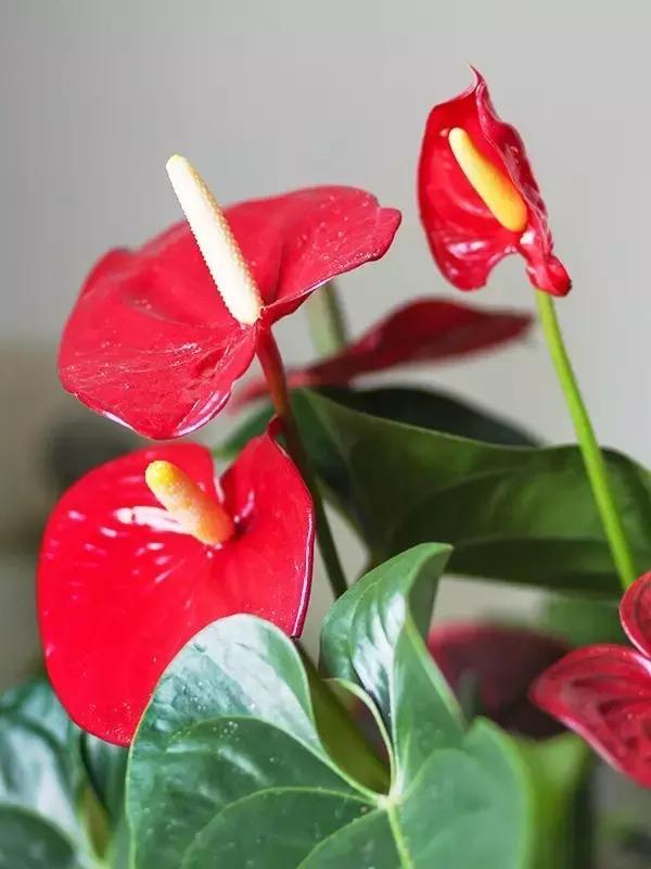 30種常用花材的花名與俗稱(上)