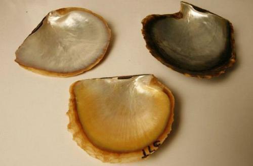 史上最全珍珠科普:挑選珍珠的正確姿勢(推薦收藏)