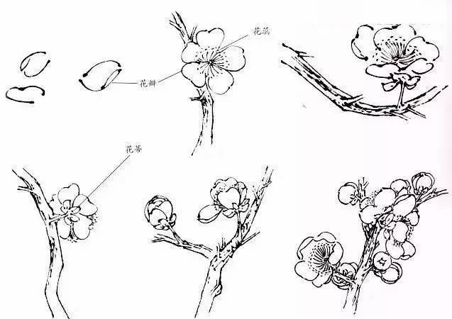 今天小编整理梅兰竹菊的基本画法,以供大家学习.图片