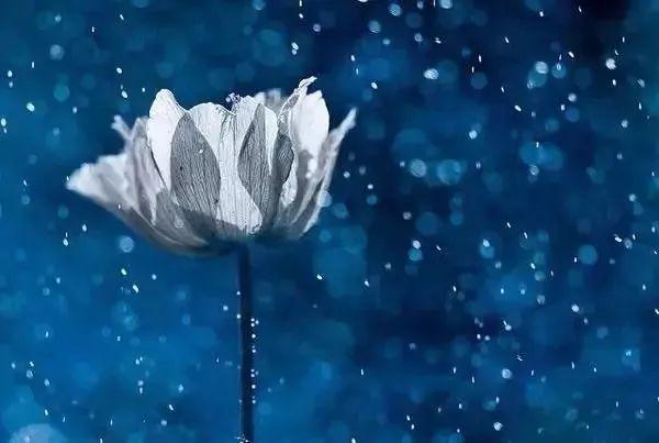 她拍出了世上最美野花,美到令人窒息