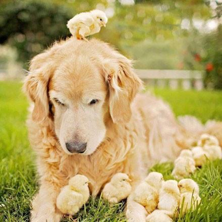 怎麼看狗身上有沒有跳蚤,長蝨子跳蚤怎麼辦