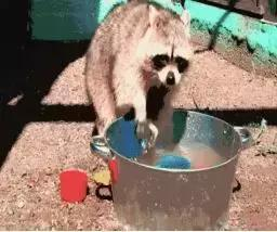 你是幾月出生,就是哪種動物! 太準了