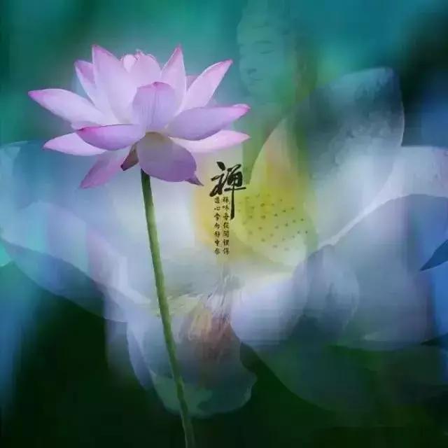 今日農曆四月十九,誦《妙法蓮花觀音菩薩》殊勝吉祥! 如意安康!