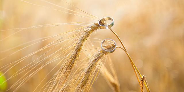 秋日婚禮,怎麼少得了一場象徵收穫的麥穗主題婚禮呢!